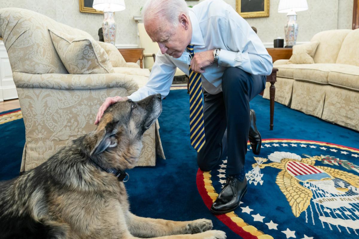 В Белом доме умерла одна из собак Байдена