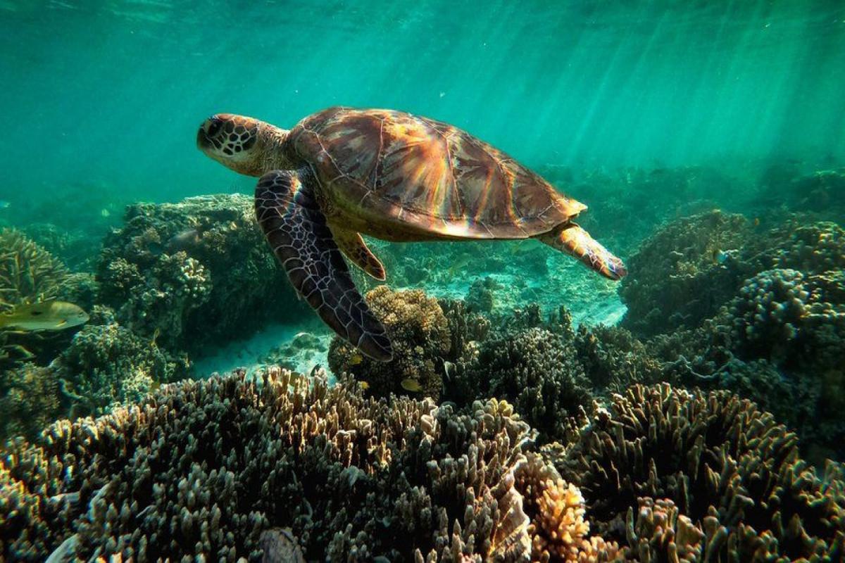 Great Barrier Reef in danger, Unesco says