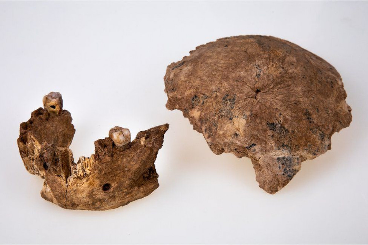 New type of ancient human discovered in Israel