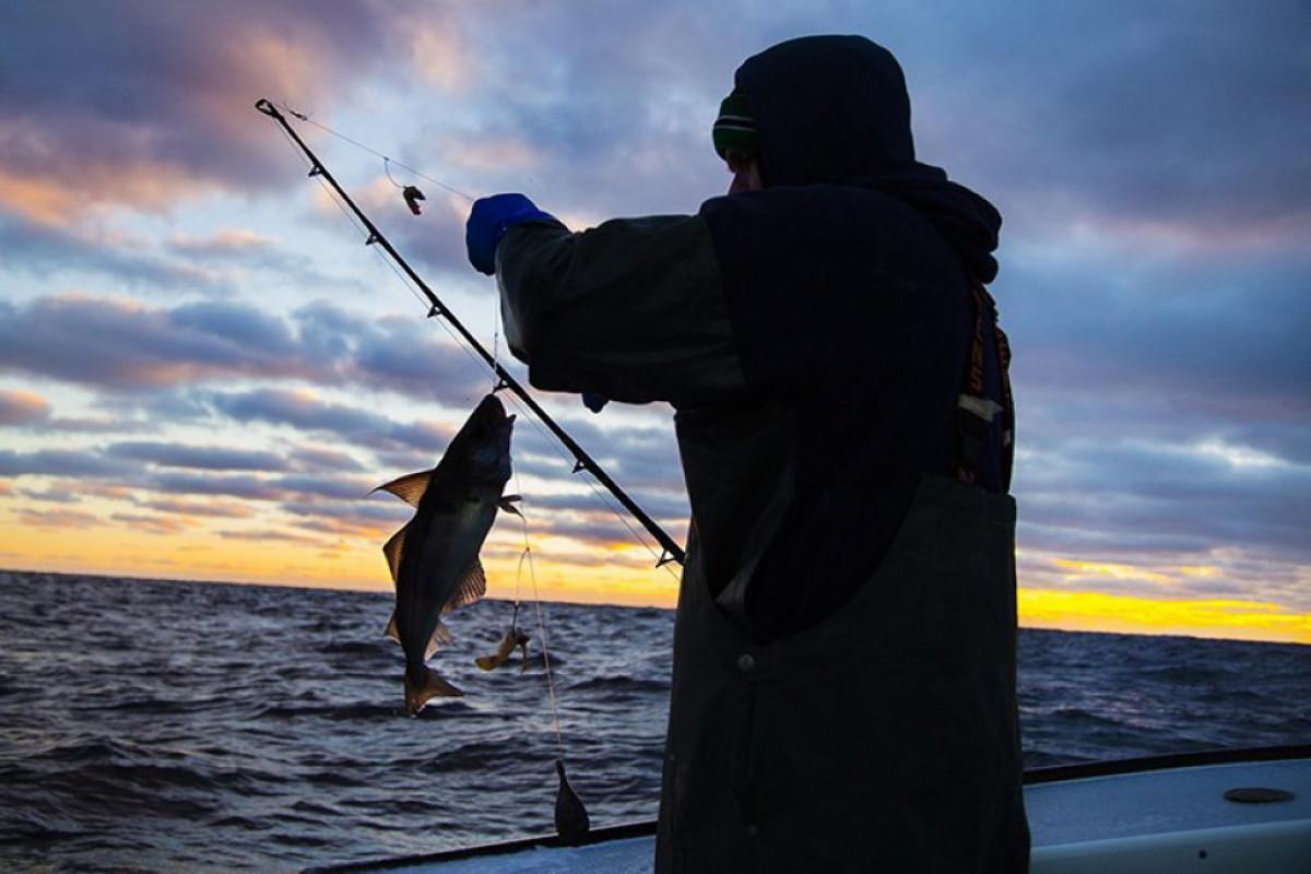 DSX və SOCAR qanunsuz balıq ovu ilə bağlı birgə məlumat yayıb