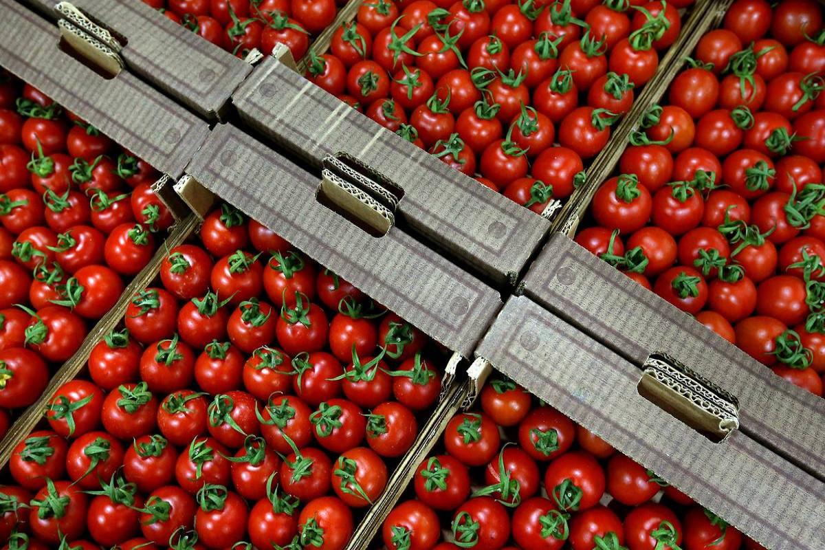 Azərbaycanın daha 11 müəssisəsinə Rusiyaya pomidor ixracına icazə verilib