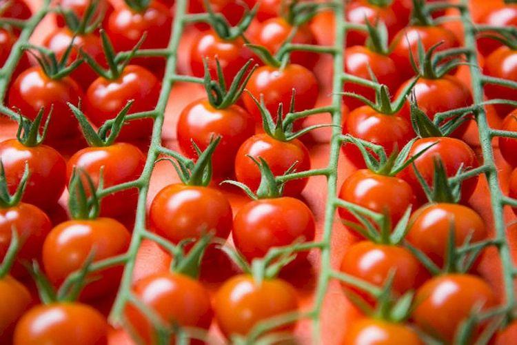 Rusiya Azərbaycandan pomidor idxalına qoyulan məhdudiyyətləri qismən ləğv edir