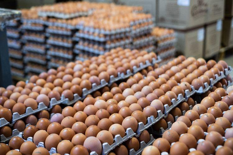 Azərbaycanda yumurta istehsalı azalıb