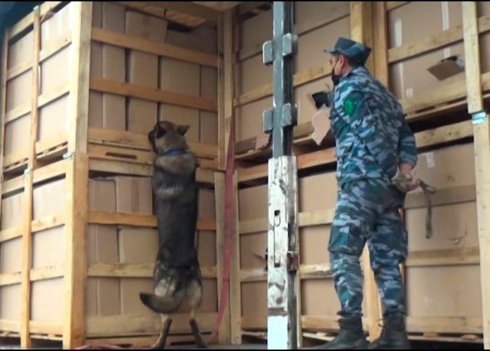 İki həftədə 730 kq narkotikin sərhəddən keçirilməsinin qarşısı alınıb