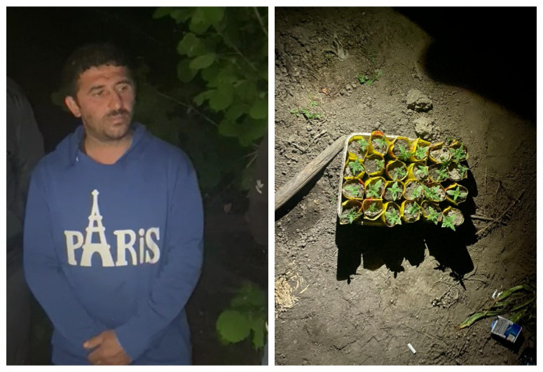 İsmayıllı meşəsində narkotik bitkilər yetişdirən şəxs tutulub