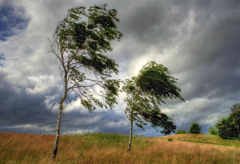 Обнародованы погодные условия на территории страны: дует сильный ветер, идут дожди