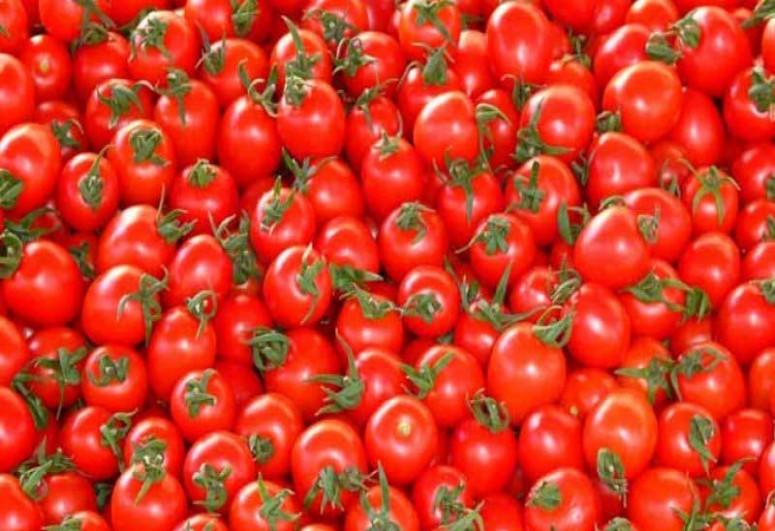 Azərbaycanın daha 30 müəssisəsinə Rusiyaya pomidor ixracına icazə verilib