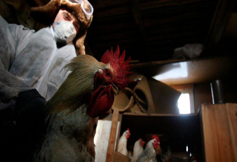 Russian scientists create strain for bird flu vaccine