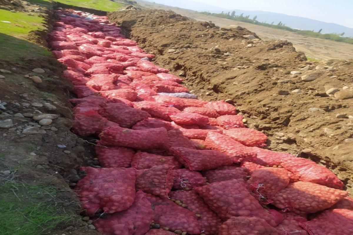 Rusiyadan idxal edilən 67 ton kartofda zərərverici aşkarlanıb