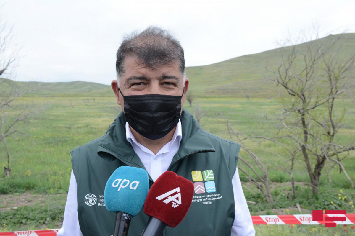 Firdovsi Əliyev