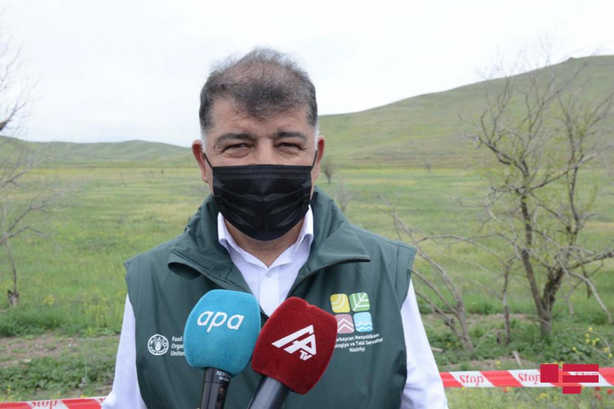 Firdovsi Aliyev