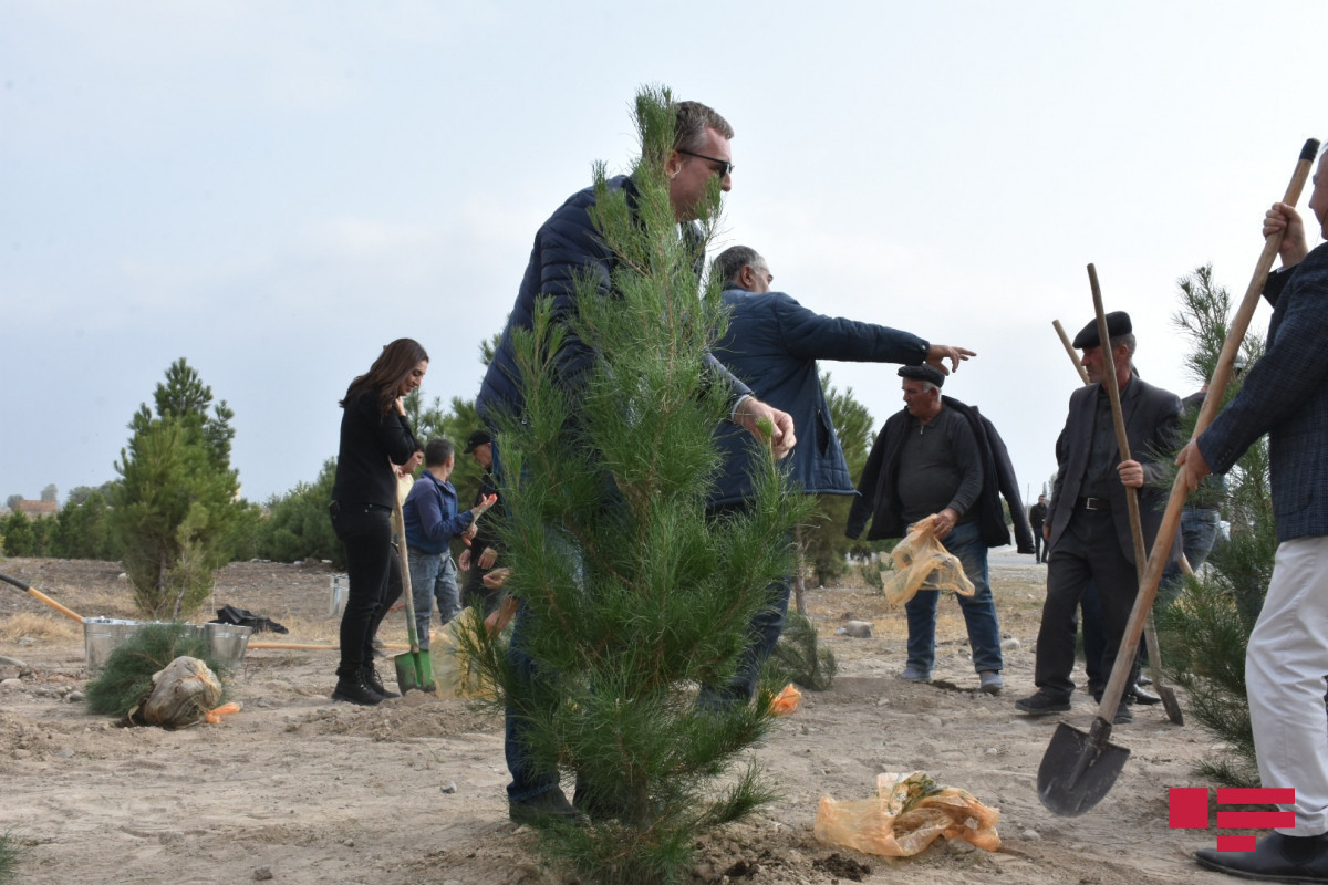 Diplomats planted trees in Magara village of Tartar