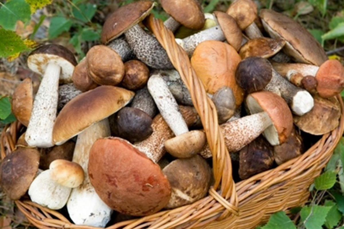 Стали известны некоторые подробности в связи с отравлением грибами и смертью двух детей в Азербайджане