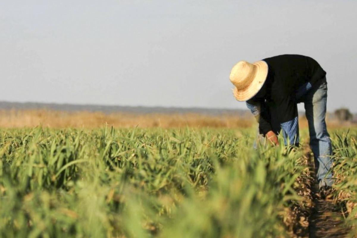 На освобожденных от оккупации территориях под посевы выделено свыше 2 000 га