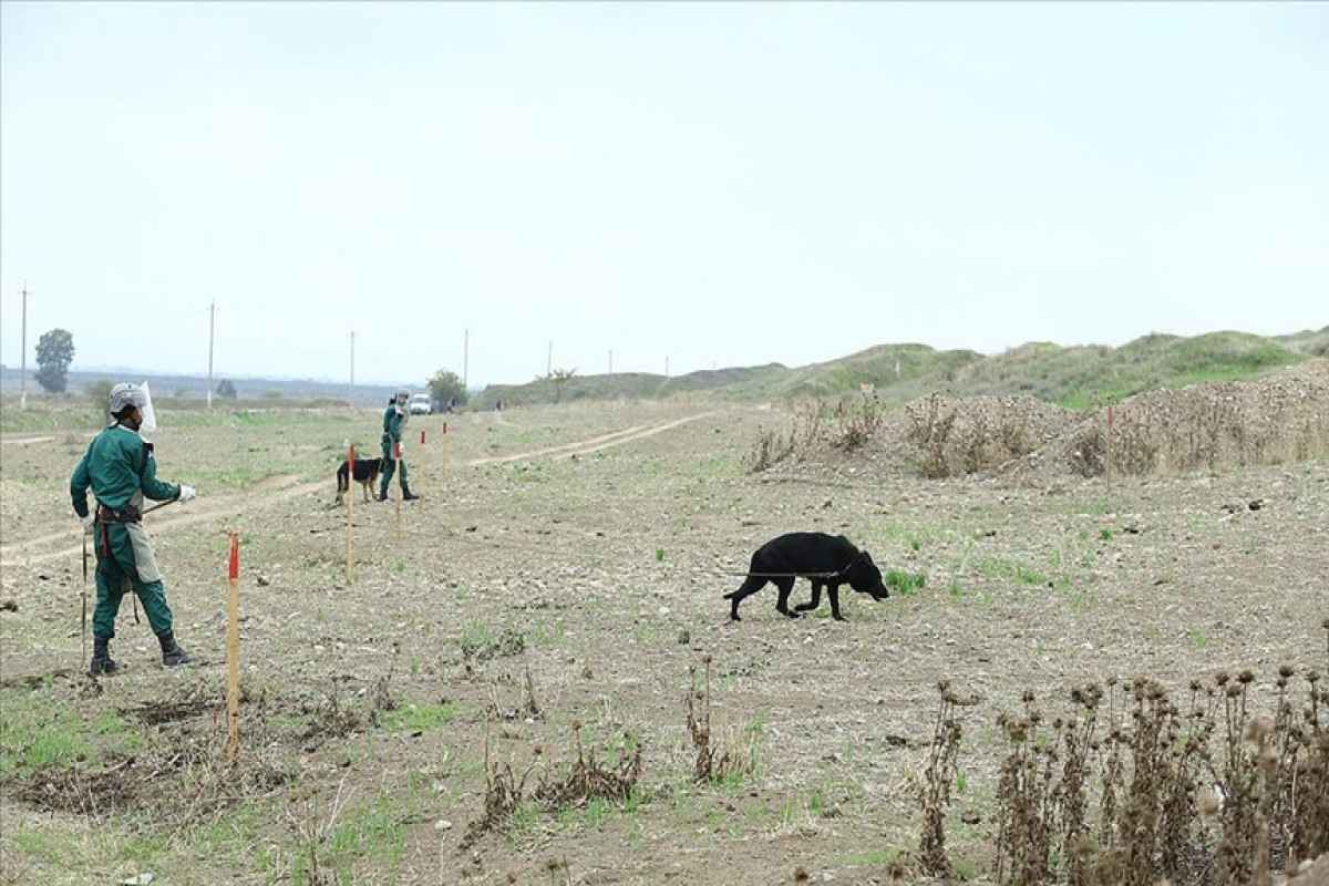 """ANAMA chairperson: """"Azerbaijan will expand cooperation with Turkey in the field of demining"""""""