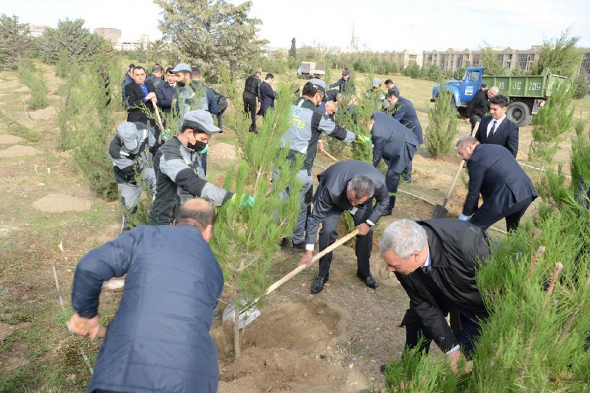 Nərimanov rayonunun iki küçəsində ağacəkmə aksiyası keçirilib