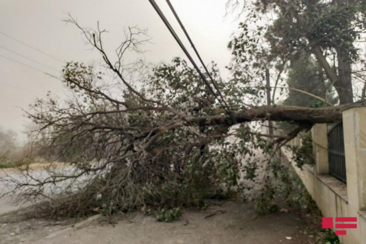 Шквальный ветер в Агдаме и Тертере создал проблемы с подачей электроэнергии