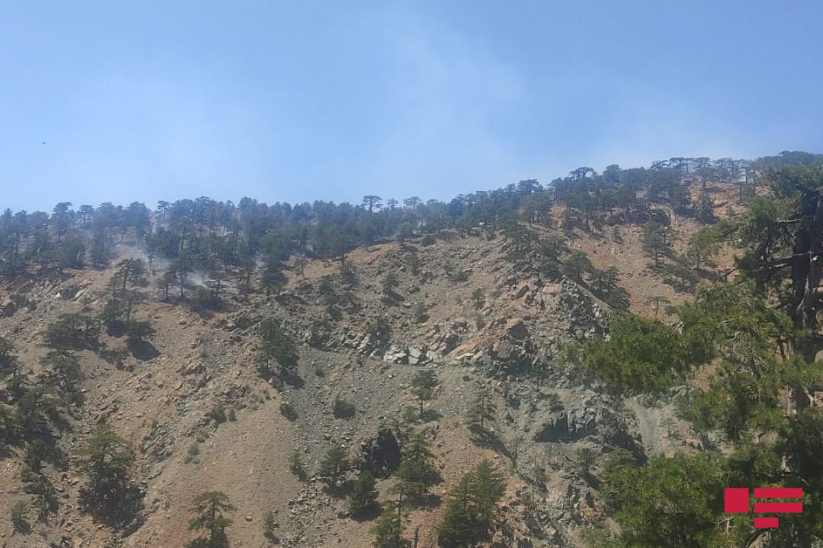 Пожар в Габале в горной местности со сложным рельефом локализован
