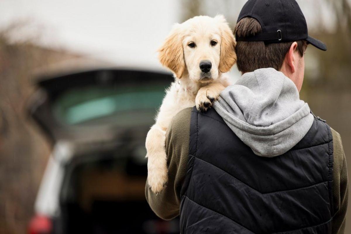 England to criminalize pet abduction