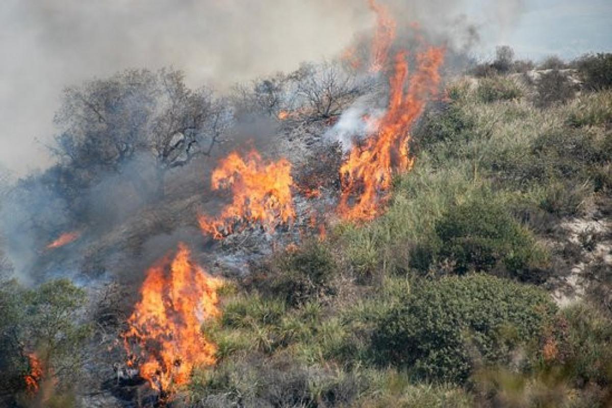 В горной местности в Бадамдаре начался пожар