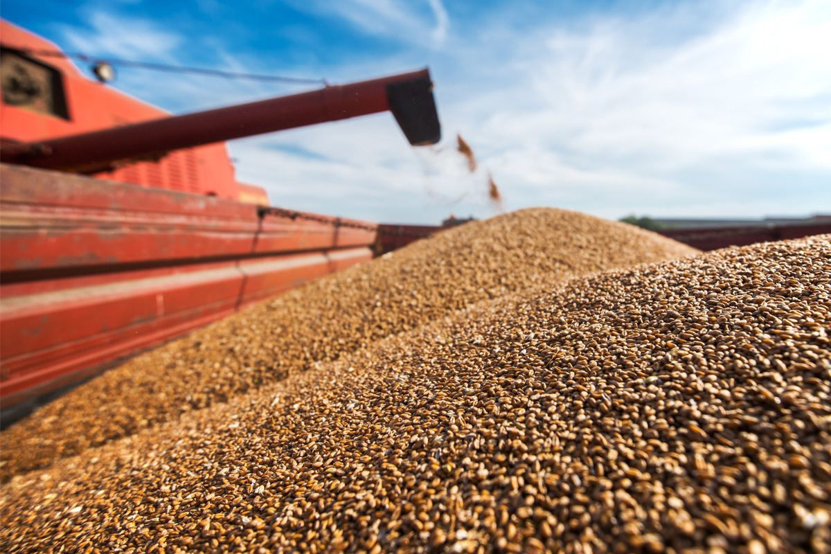 FAO: Reduced harvest expectations in several major exporting countries pushed up world wheat prices