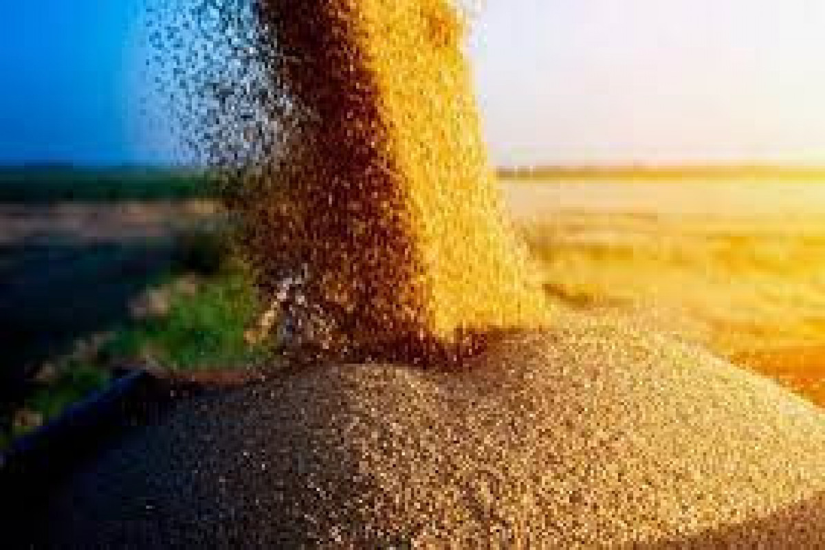 Customs duty on export of wheat and wheat flour from Azerbaijan, changed