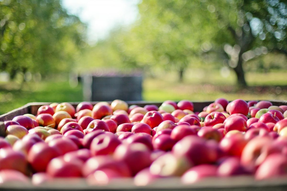 Eleven more enterprises of Azerbaijan allowed to export apples to Russia