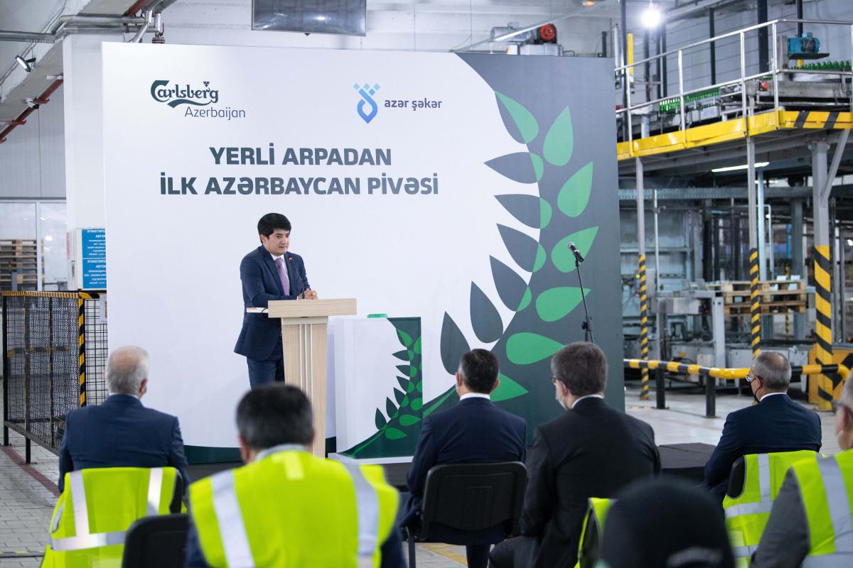 """""""Carlsberg Azerbaijan"""" yerli arpadan hazırlanmış """"Xırdalan"""" pivəsinin istehsalına başlayıb - FOTO"""