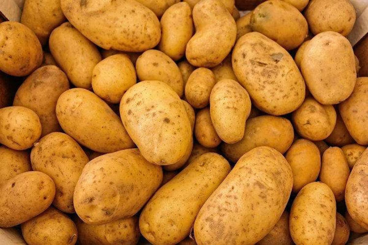 В завезенном из Ирана картофеле обнаружена моль
