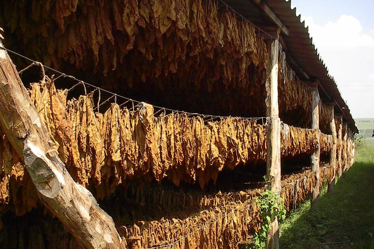 В странах ЕврАзЭС может полностью прекратиться производство сигарет