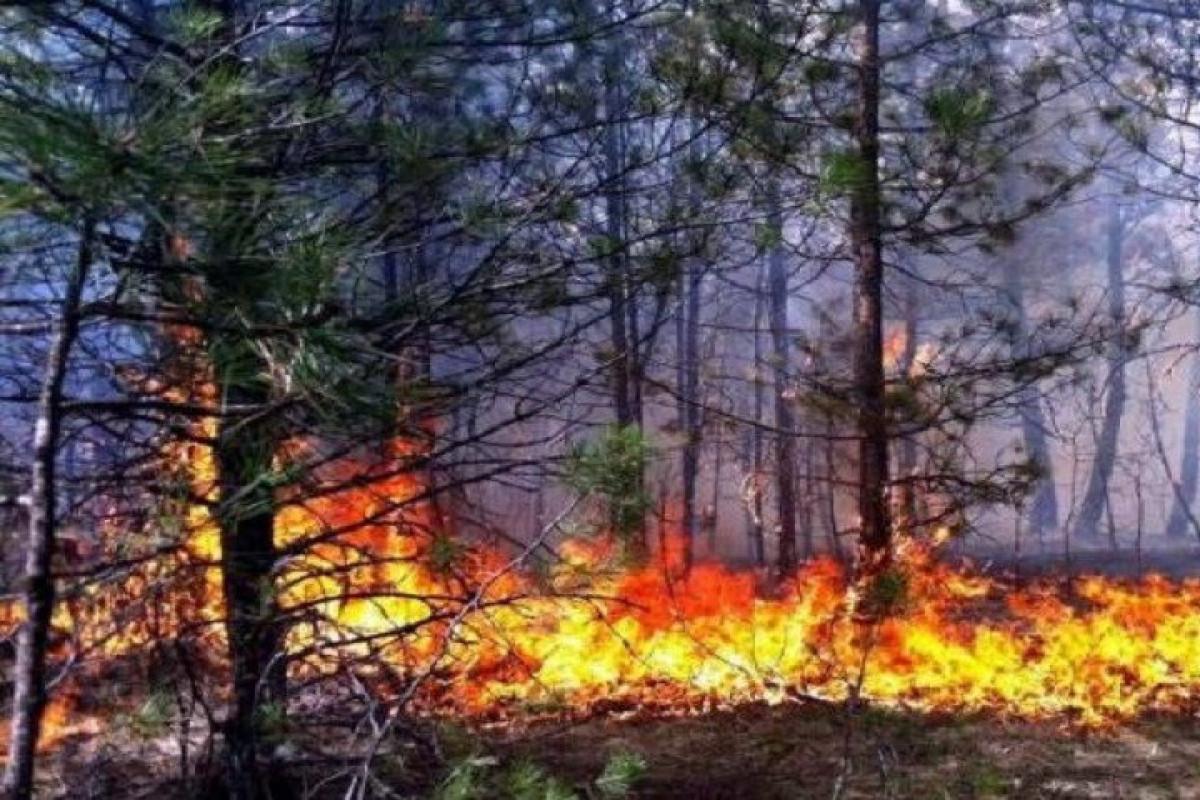 Иран оказал помощь Армении в тушении лесных пожаров